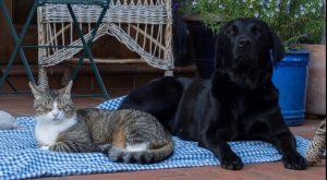 Keien Fenns, Katzen und... (3)