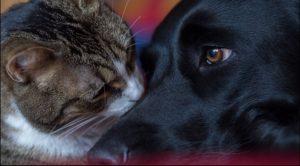 Keien Fenns, Katzen und... (4)